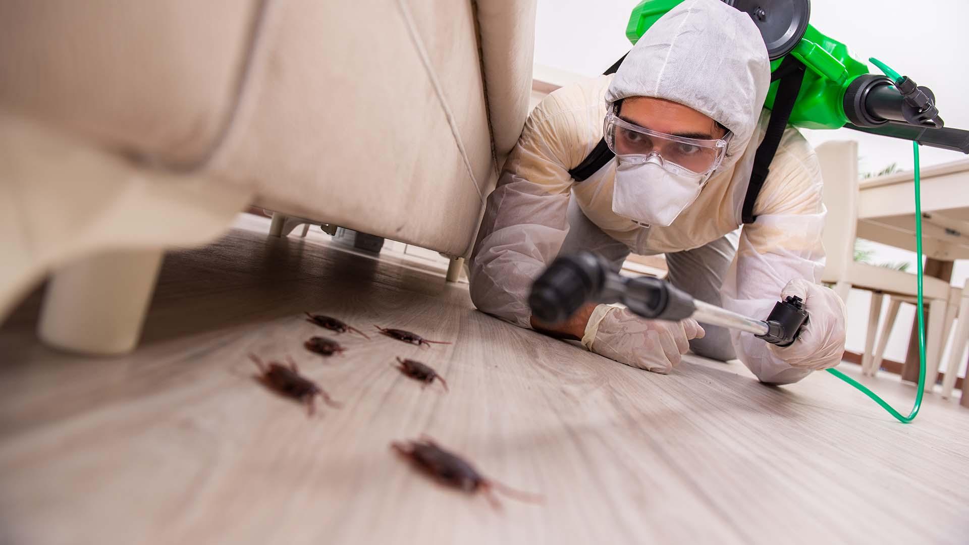 افضل شركة مكافحة حشرات بالرياض – 0508001277